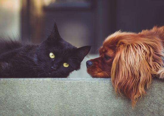 hund katze kennenlernen)